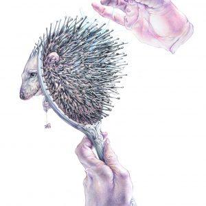 Hedgehog Brush-ilustratie-si-caricatura-